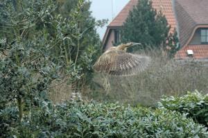 coe21vogel